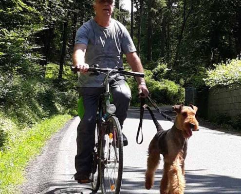 Bernhard Heinen - Airedale Terrier vom Sandbend