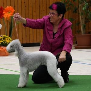 Edith Schneider - Bedlington Terrier vom Orkelsfelsen