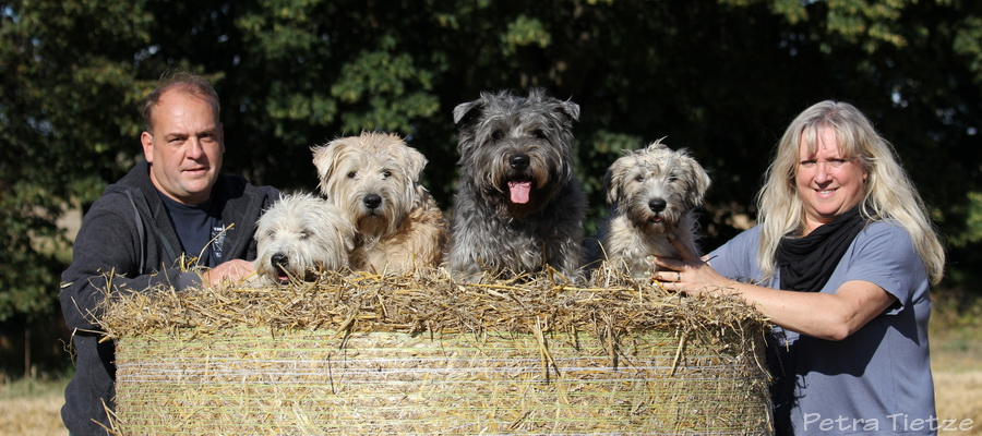 Familie Engel-Beier mit ihrem Irish Glen of Imaal Terrier Rudel