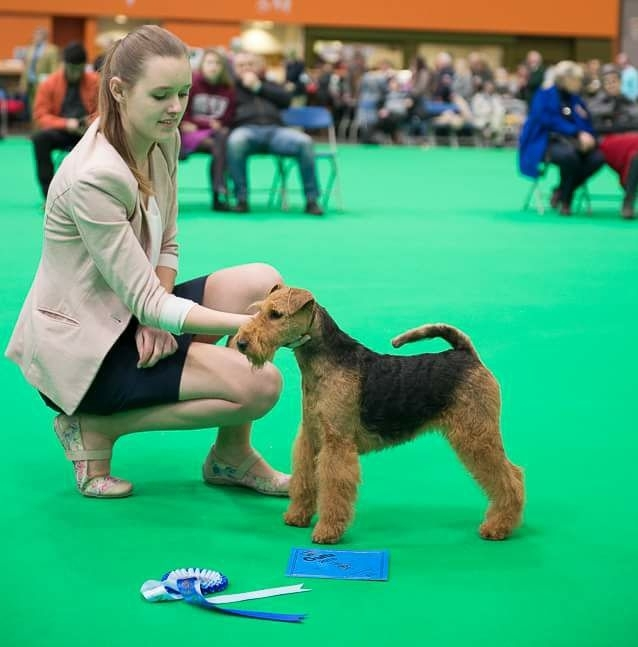 Pamirs Welsh Terrier