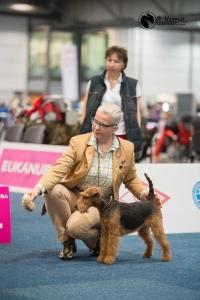 Welsh Terrier vom Zigeunerloch