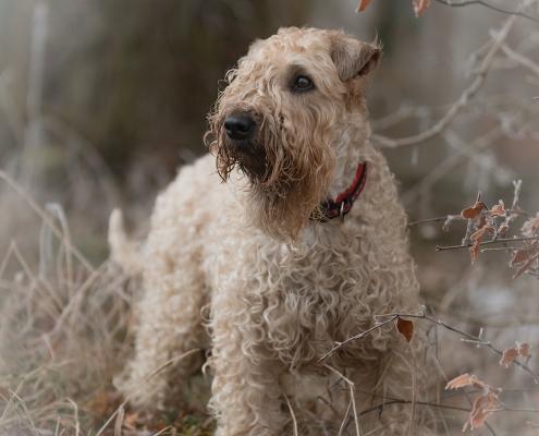 Hundefotografie Kirsten Bruns