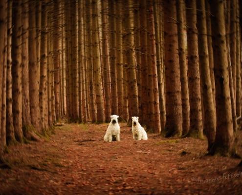 Hundefotografie Angela Richter