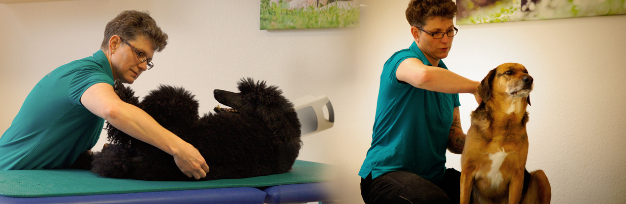 Romana Schallenberg - Physiotherapie für Hunde und Katzen