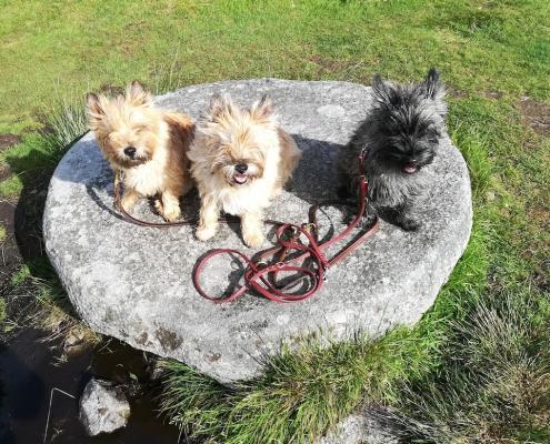 Cairn Terrier vom Lohbachtal