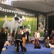 VDH-Messe Hund und Pferd Dortmund 2019