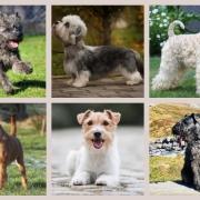 Terrier.de - Rasseportraits