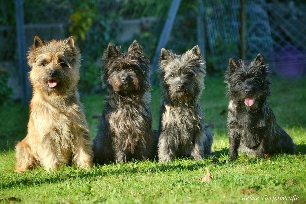 Rasseportrais aller Terrier
