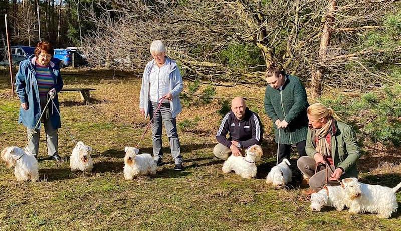 Sealyham Terrier Treffen