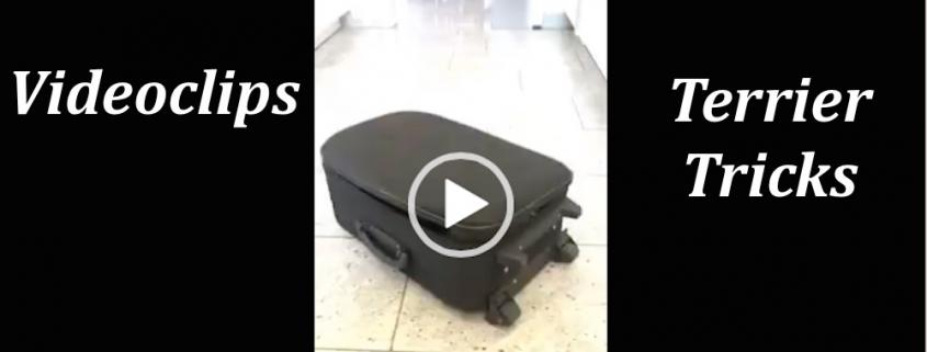 Tricks und Kunststückchen von Terriern auf Video
