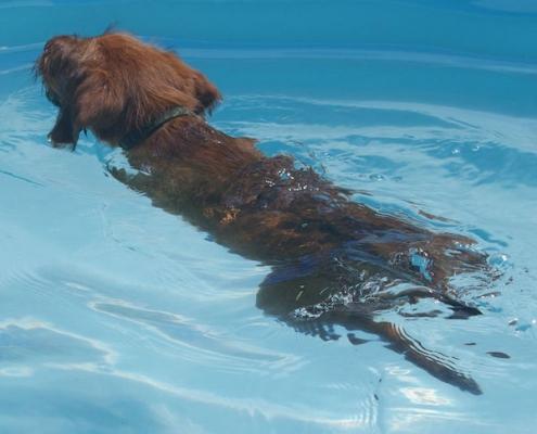 Welpensozialisierung Schwimmtraining